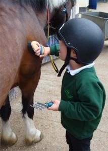 Boy grooming pony