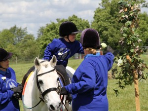 Girl on grey pony reaching for an apple